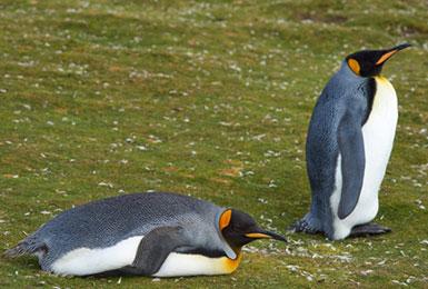 Kommunikationsseminar der Networx Academy, Pinguin an Land unbeholfen