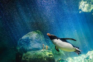 Kommunikationsseminar der Networx Academy, Pinguin unter Wasser in seinem Element